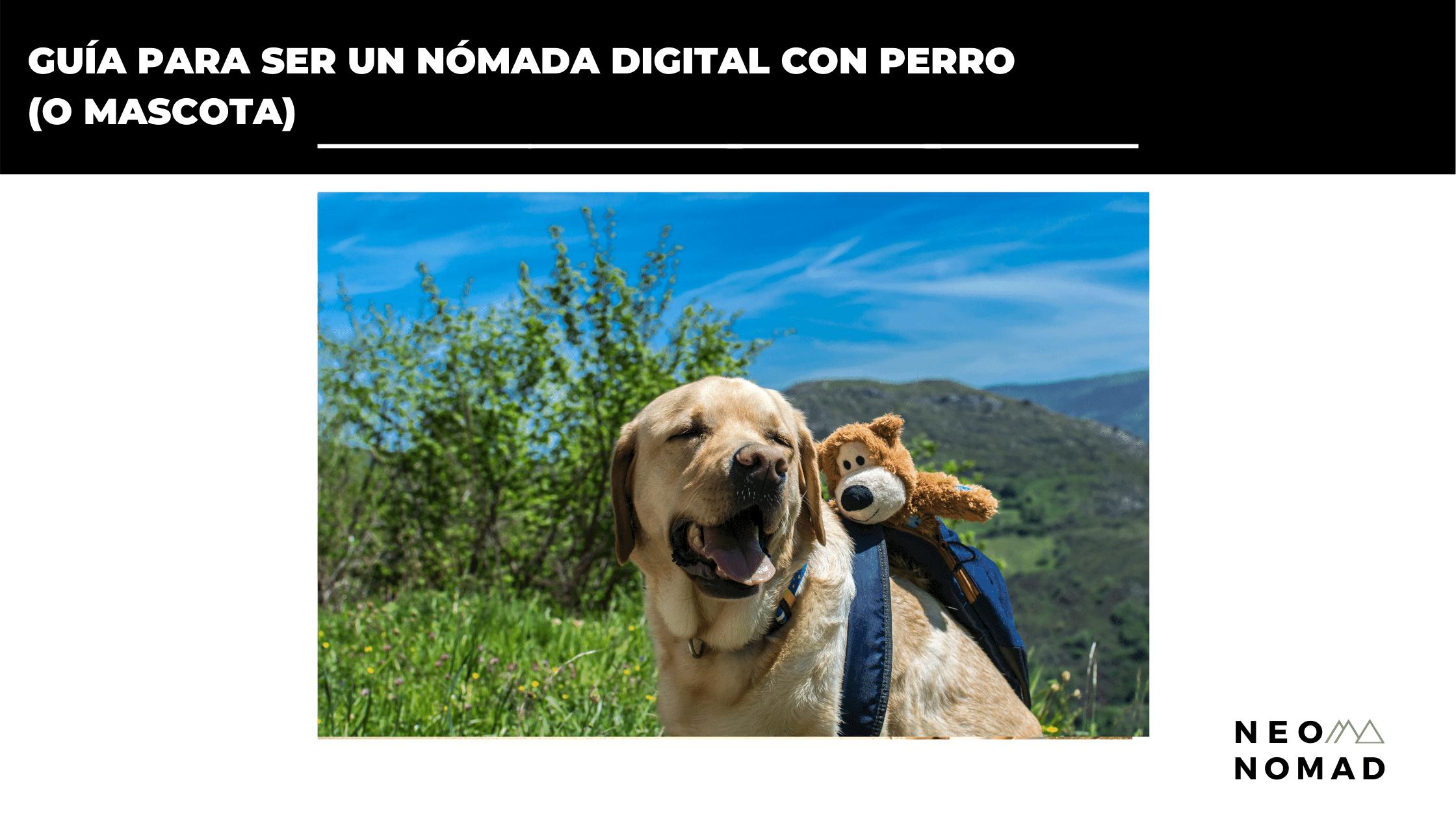 nómada digital con perro